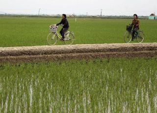 가뭄도 태풍도 꺾지 못한 북한의 '보이지 않는 손'