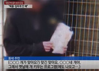 연예인 소유 대형견, 80대 노인 물어…해당 배우 SNS '시끌'