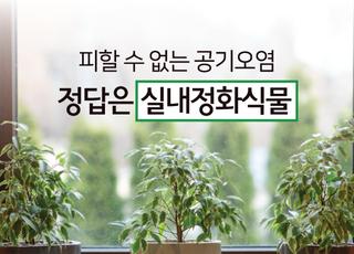피할 수 없는 공기오염, 정답은 '실내정화식물'