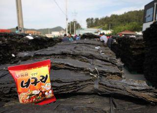 """농심, 완도 햇다시마 구매 돌입···""""짜파구리 인기에 사용량 30%↑"""""""