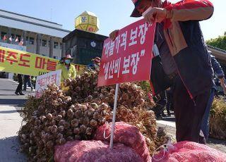 마늘 수급에 최대 30억원 투입, 1만2000톤 소비·수출 촉진