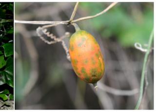 우리나라에서 미기록 식물 가장 많은 지역은…제주와 서남해
