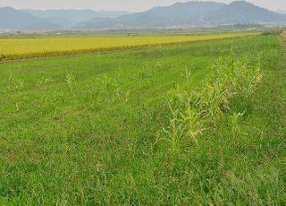 올해 전국 농지이용실태조사, 8월~11월까지 실시