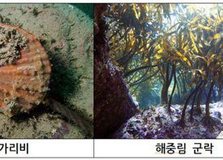 [기획-변화하는 바다③] 국내 3348개 섬···끝단 섬 생물들