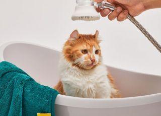 반려동물 브랜드 '후시펫', 윤균상과 함께 고양이 목욕과 피모관리를 위한 '더마후샤워기 출시