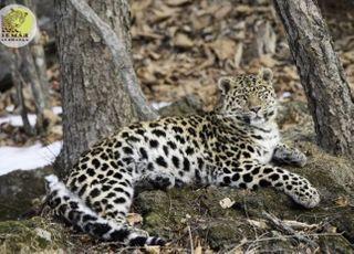 표범 등 멸종위기종 보전 위해 한-러시아 연구기관 협약