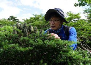 기후변화 취약종 구상나무, 배아줄기세포 배양 성공